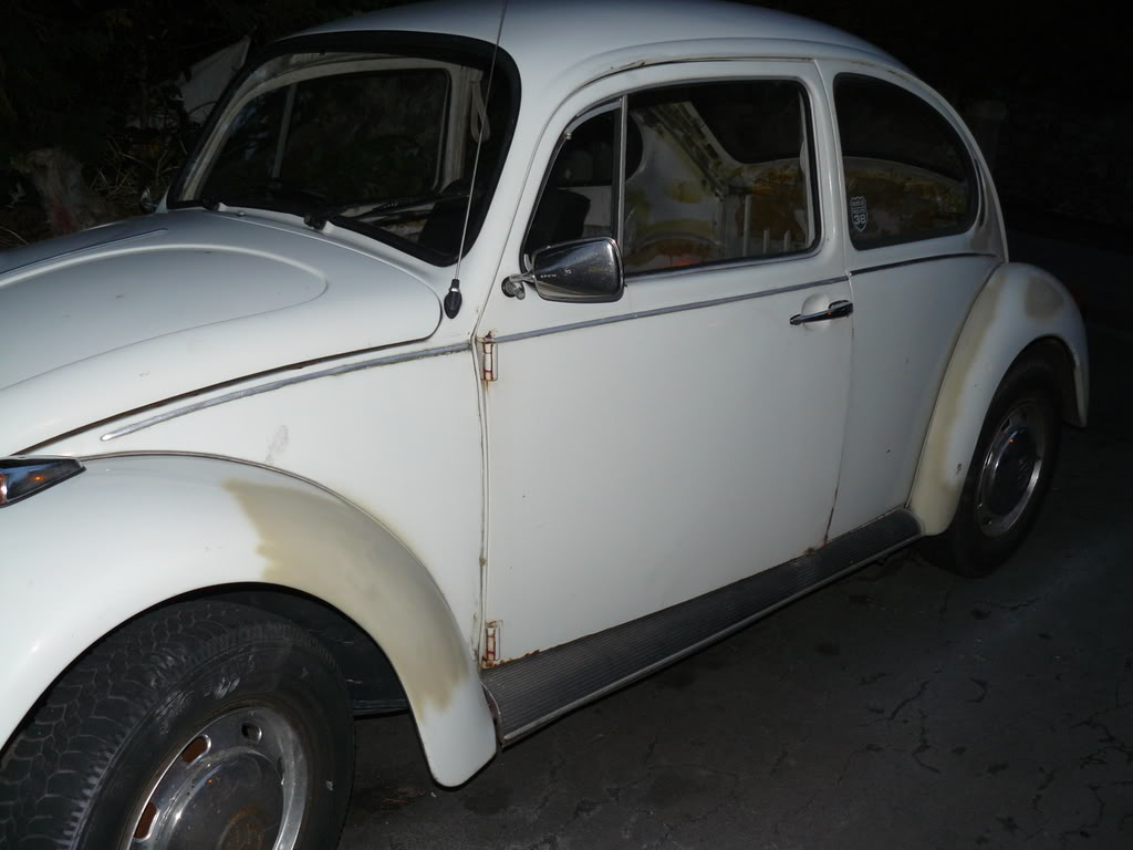 My first beetle Stella... P1020448