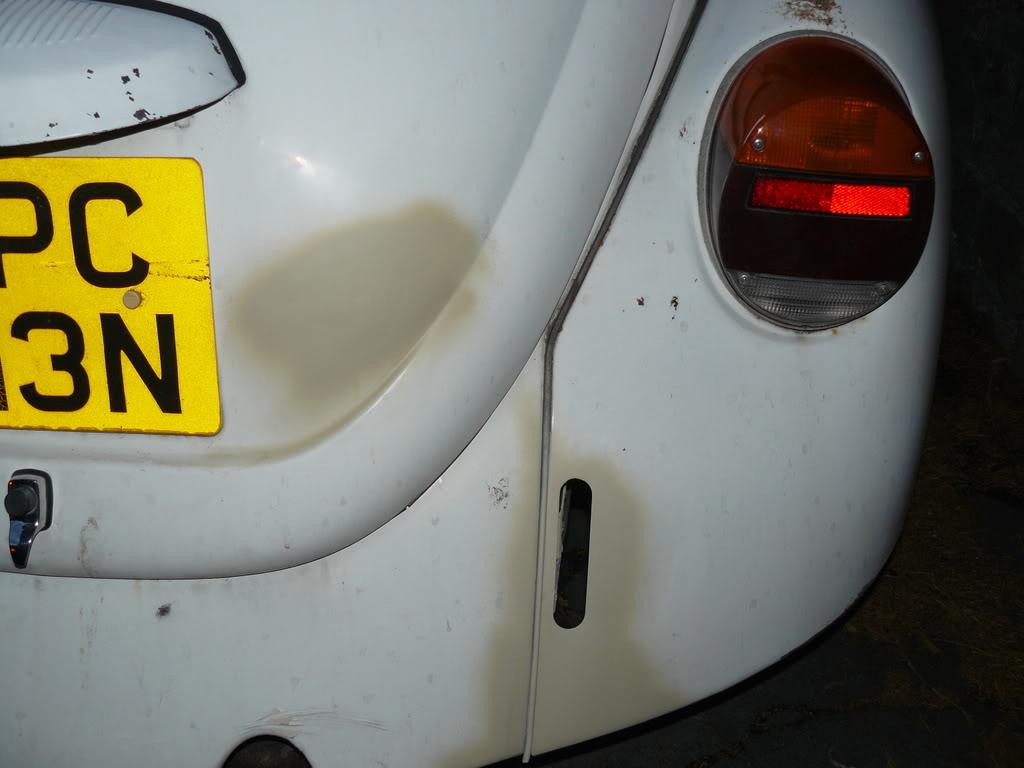 My first beetle Stella... P1020452
