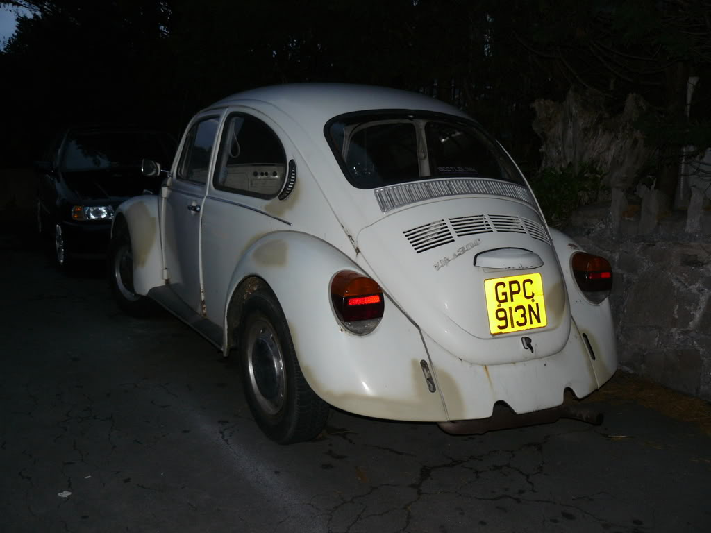 My first beetle Stella... P1020453