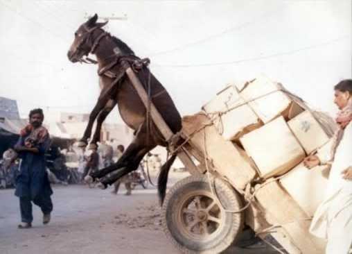 Sunset Jumeirah Beach today at 6pm OL-Donkey-Cart