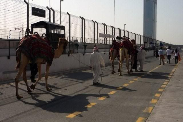 24 hour endurance race this weekend in Dubai P1000484