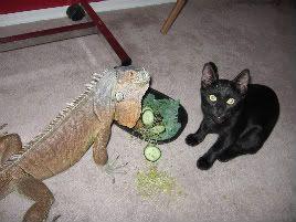 Here Lizard-Lizard! IMG_3549v-1