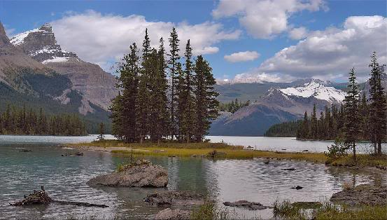 Cây Cảnh Đẹp - Page 8 Banff86665mf