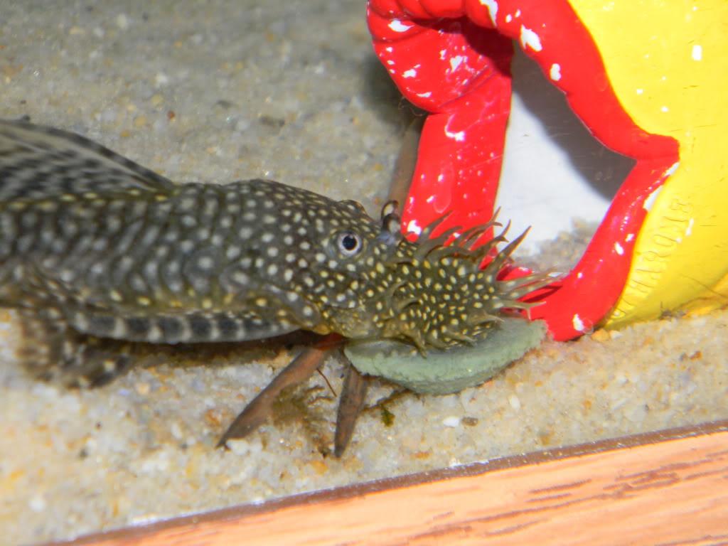 Christmas POTM Contest... Fish010