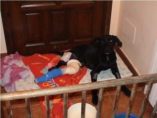 OSCAR,3 días tirado sin auxilio en el arcén(Sevilla) Oscar