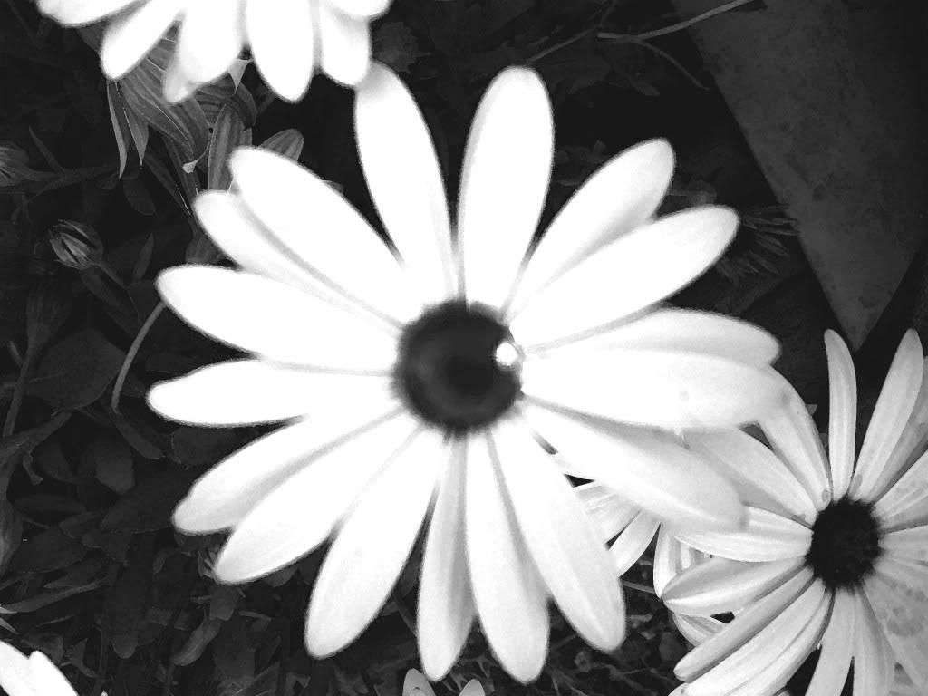 Blanco Negro Y Sepiaausencia De Color Página 69