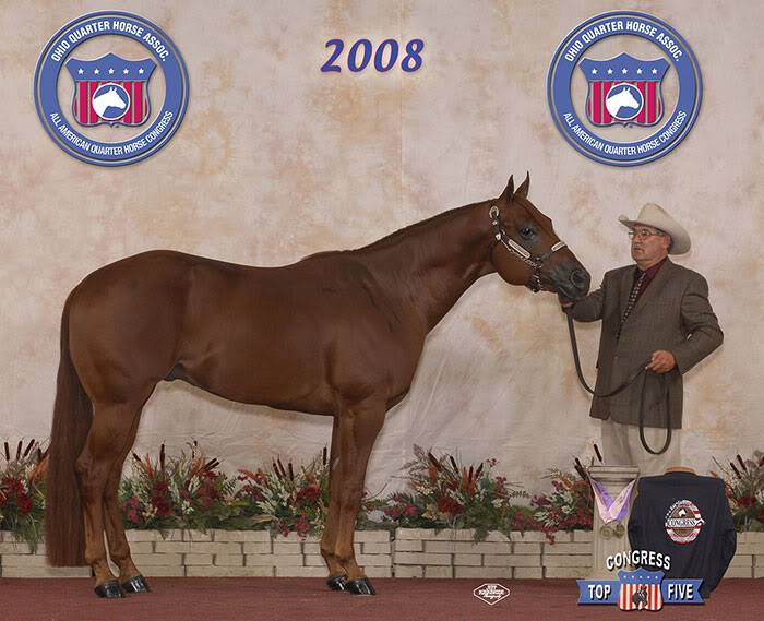 QH Stallions for breeding service! (Not for sale.) ADR-Congress08-Halter2