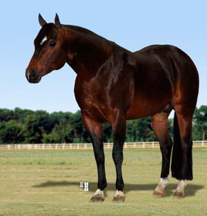 QH Stallions for breeding service! (Not for sale.) ATouchofSuddenAQHAStallion