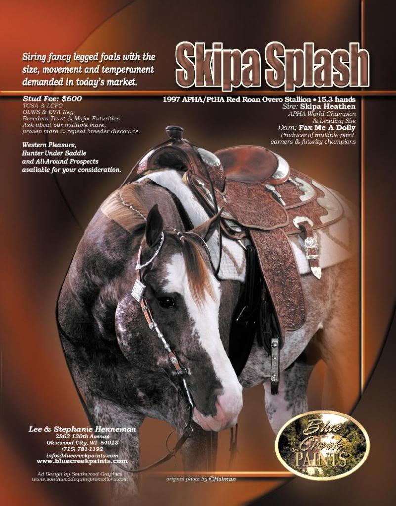 Champion Stallion Skipa Splash is for sale! Skipa_Splash_Ad_SWG-807x1031