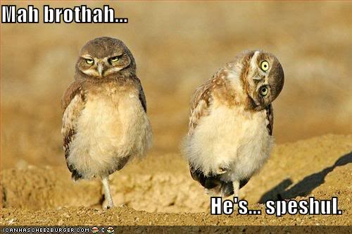 HAHAHA Funny Pic Thread - Page 2 Funny-pictures-owls-twisted-head