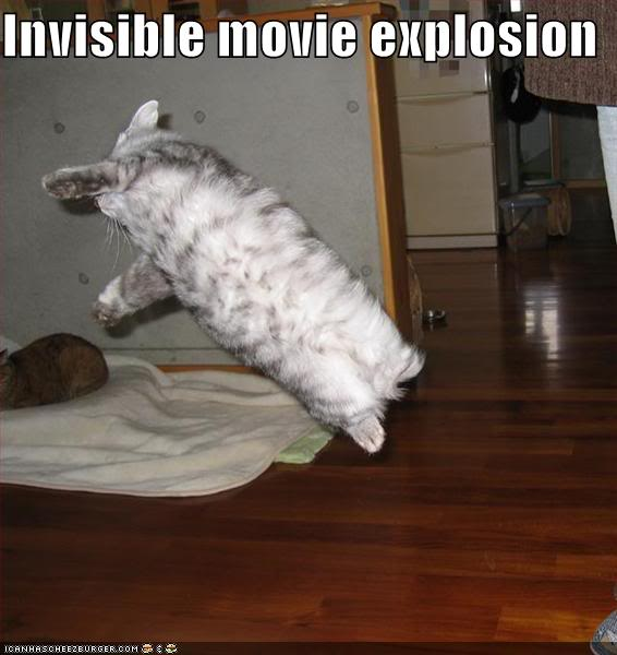 HAHAHA Funny Pic Thread - Page 2 Funny-pictures-stunt-cat