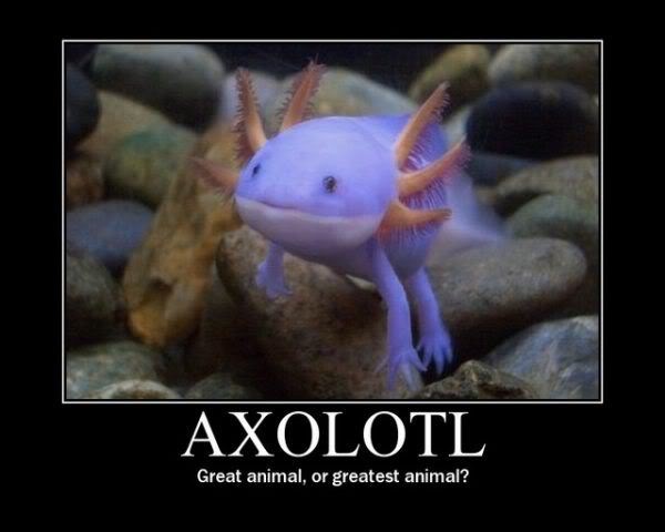 Axolotls are awesome (with pictures made of awesome) Axolotl