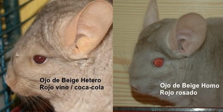 Beige Hetero y Homo Page1_0
