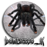 Domenico_k