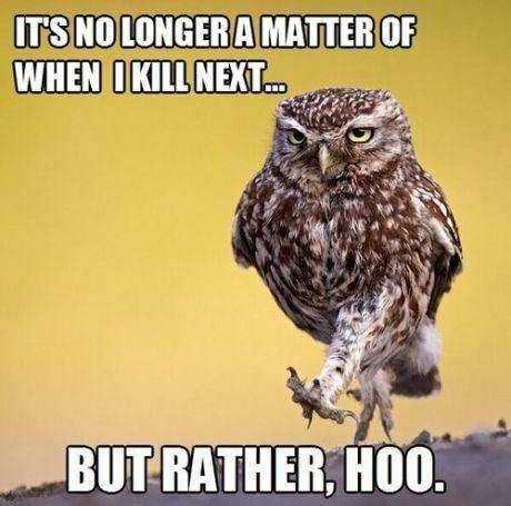Youtube/funny vids/funny pics page - Page 3 Owl_zps1dc1fc4d