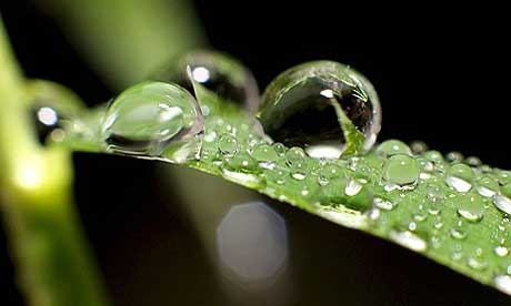 Kapljice vode - Page 5 Raindrops460x276