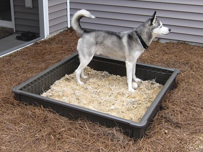 Dakota's new sandbox! IMG_0172