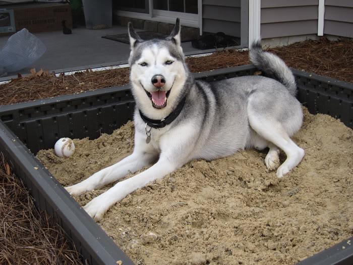 Dakota's new sandbox! IMG_0185