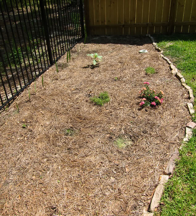 Val's 2011 gardening thread - Page 5 IMG_0554