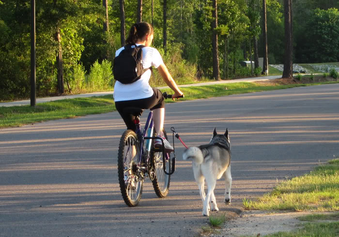 cycling with your Husky - Page 2 IMG_1080