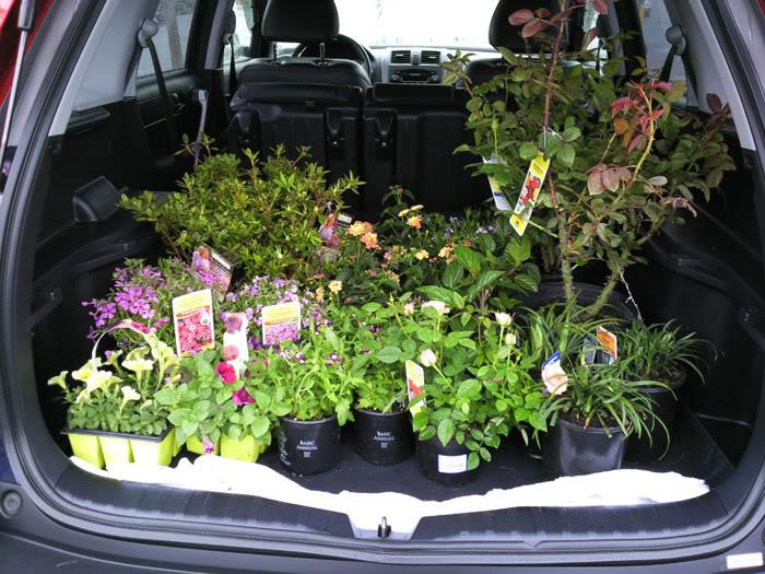 Val's 2011 gardening thread Photo0903