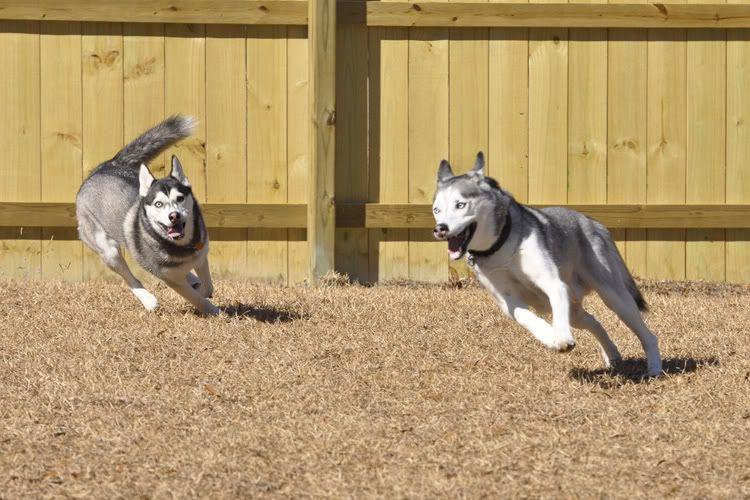 Dakota & Sora's weekend adventure! _DSC9072