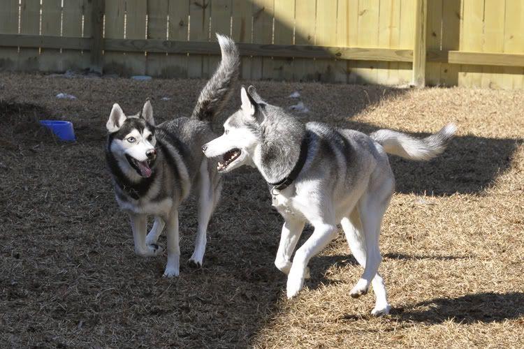 Dakota & Sora's weekend adventure! _DSC9121