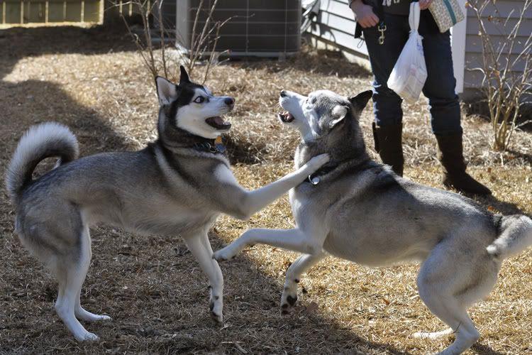 Dakota & Sora's weekend adventure! _DSC9156
