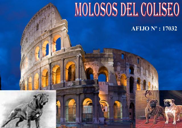 Molosos del Coliseo