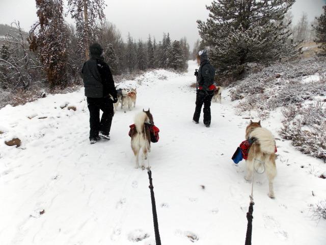 Claudia's husky birthday hike - Salt Lick Trail, Summit County *photo heavy* - Page 2 2012-11-10113534