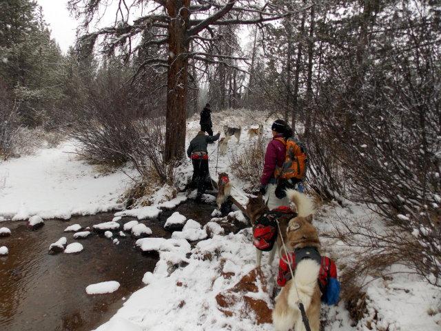 Claudia's husky birthday hike - Salt Lick Trail, Summit County *photo heavy* - Page 2 2012-11-10120618