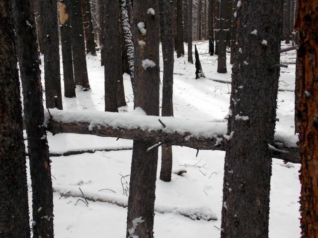 Claudia's husky birthday hike - Salt Lick Trail, Summit County *photo heavy* - Page 2 2012-11-10124214