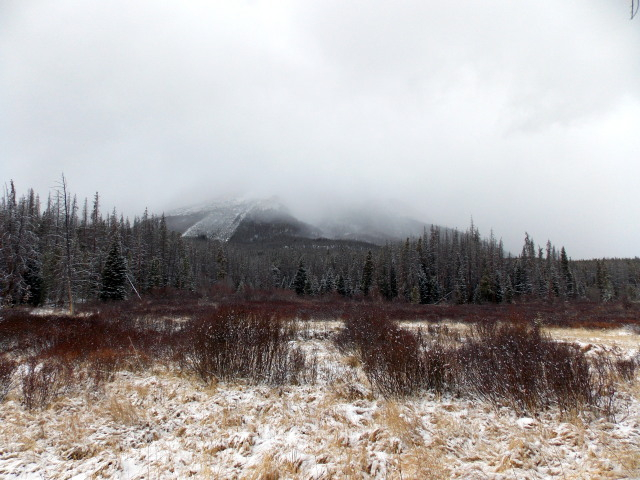 Claudia's husky birthday hike - Salt Lick Trail, Summit County *photo heavy* - Page 2 2012-11-10132824