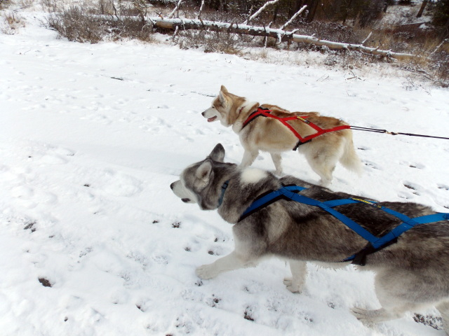Claudia's husky birthday hike - Salt Lick Trail, Summit County *photo heavy* - Page 2 2012-11-10150502