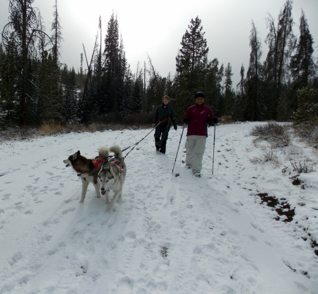 Claudia's husky birthday hike - Salt Lick Trail, Summit County *photo heavy* - Page 2 2012-11-10150509