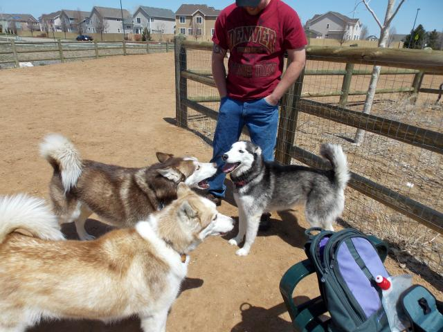 what do you get when you put 6 husky friends together.... 2011-12-31230000-107