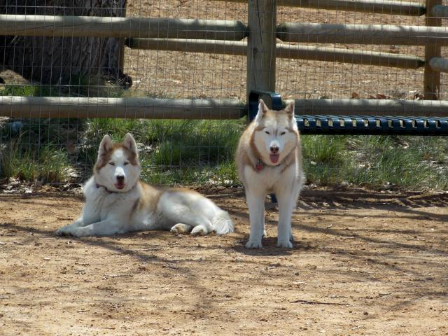 what do you get when you put 6 husky friends together.... 2011-12-31230000-110