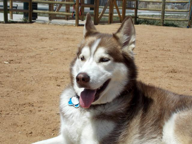 what do you get when you put 6 husky friends together.... 2011-12-31230000-112