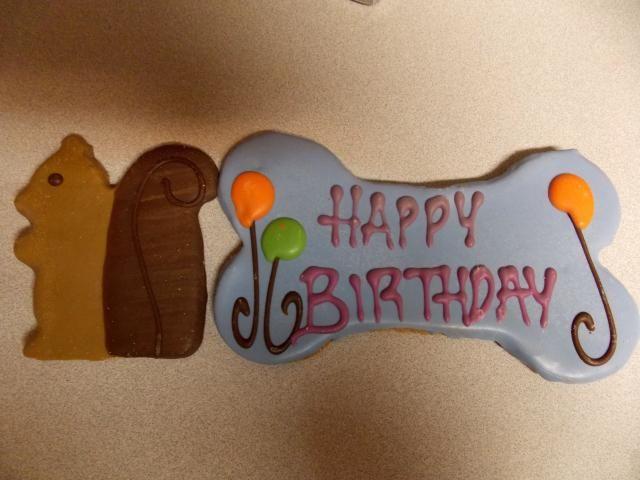 Happy Got ya Day & 5th Birthday Jack!!! 2011-12-31230000-452