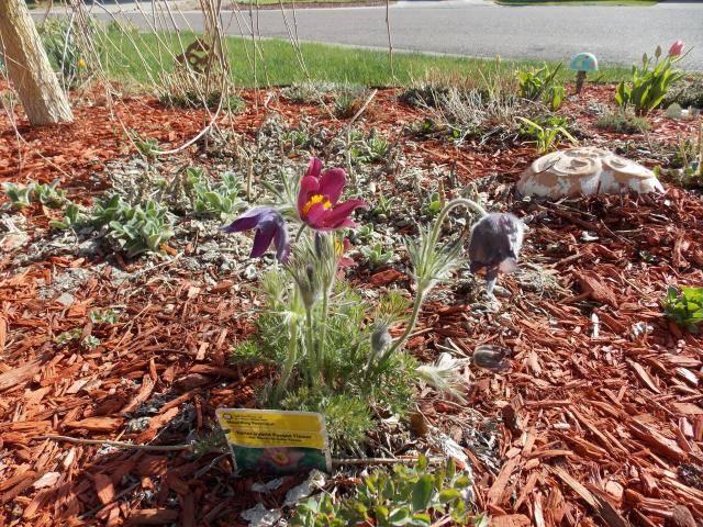 Jenn's Gardening thread- 2013 2011-12-31230000-102