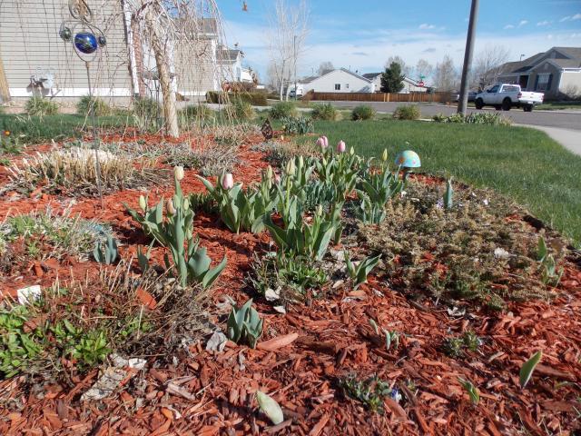 Jenn's Gardening thread- 2013 2011-12-31230000-103