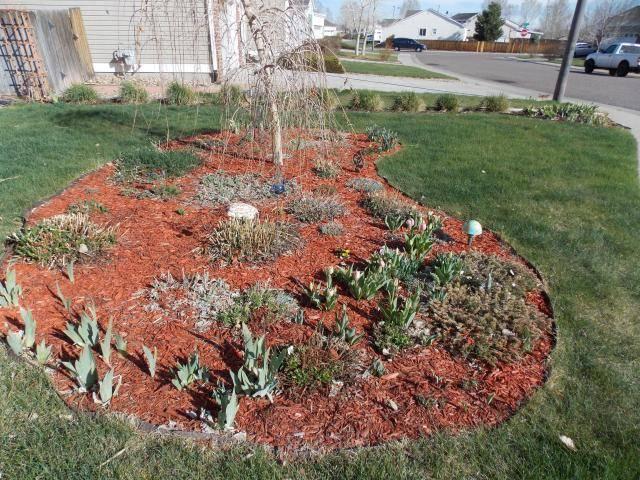 Jenn's Gardening thread- 2013 2011-12-31230000-105