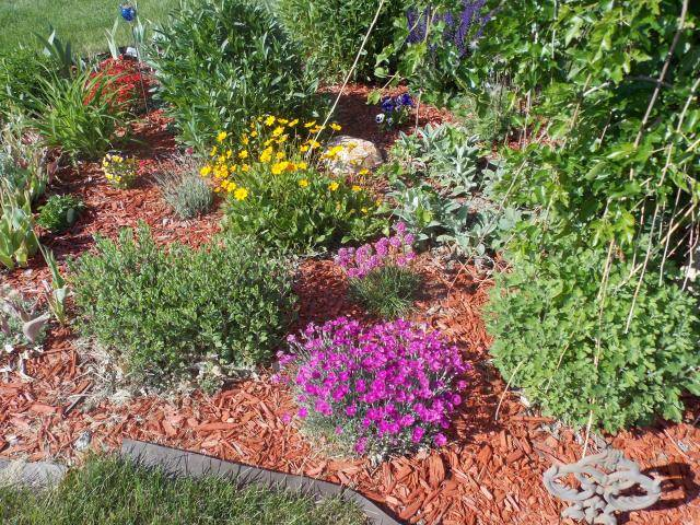 Jenn's Gardening thread- 2013 2011-12-31230000-4-1