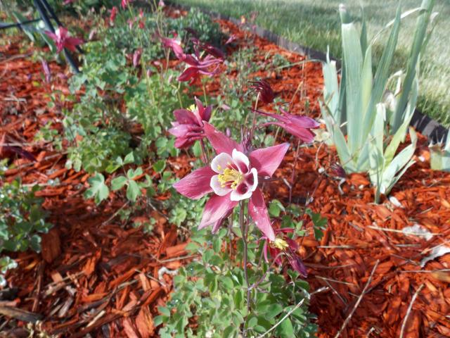 Jenn's Gardening thread- 2013 2011-12-31230000-4