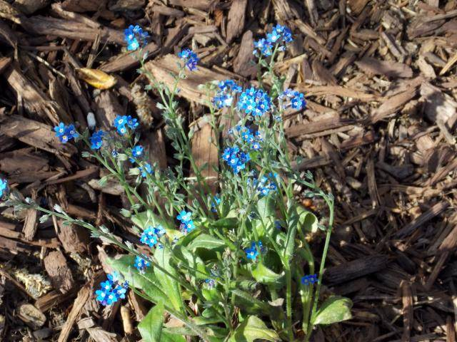 Jenn's Gardening thread- 2013 2011-12-31230000-95