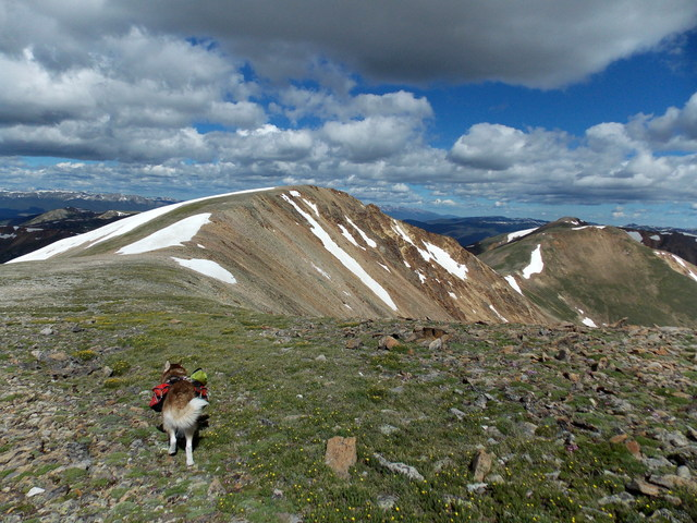 Hiking with dogs~4 Summits, one day~ Colorado DSCN2237