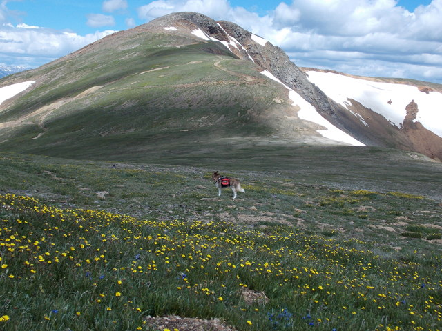 Hiking with dogs~4 Summits, one day~ Colorado DSCN2265