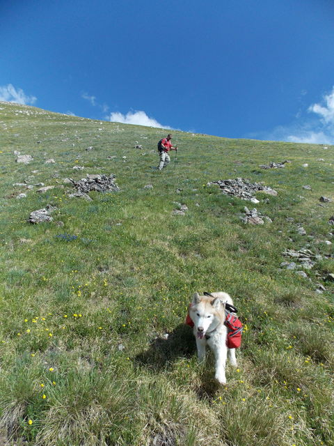 Hiking with Dogs~ Kelso Mt. CO~ 13,164ft DSCN2161