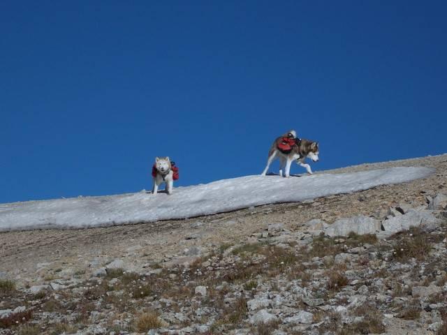 Hiking with dogs~Peak 9- 13,195ft & Peak 10- 13,633ft ~ Colorado DSCN2704