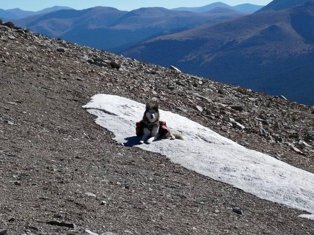 Hiking with dogs~Peak 9- 13,195ft & Peak 10- 13,633ft ~ Colorado DSCN2734